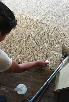 Pet Stain Removal Services In Beverly Hills